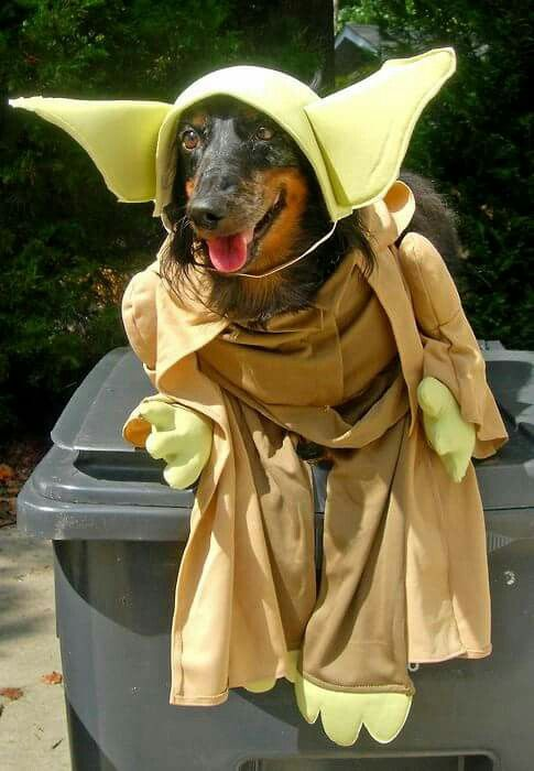 Pin By Abby Fallahee On Furbabies Pet Costumes Dog Costumes Funny Dachshund