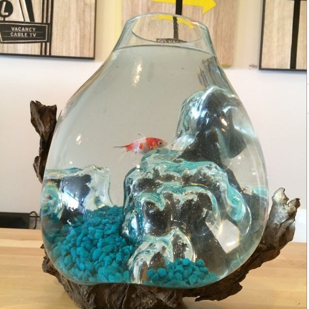 Glass fishbowl fish bowl melted over driftwood wood for Glass fish bowls
