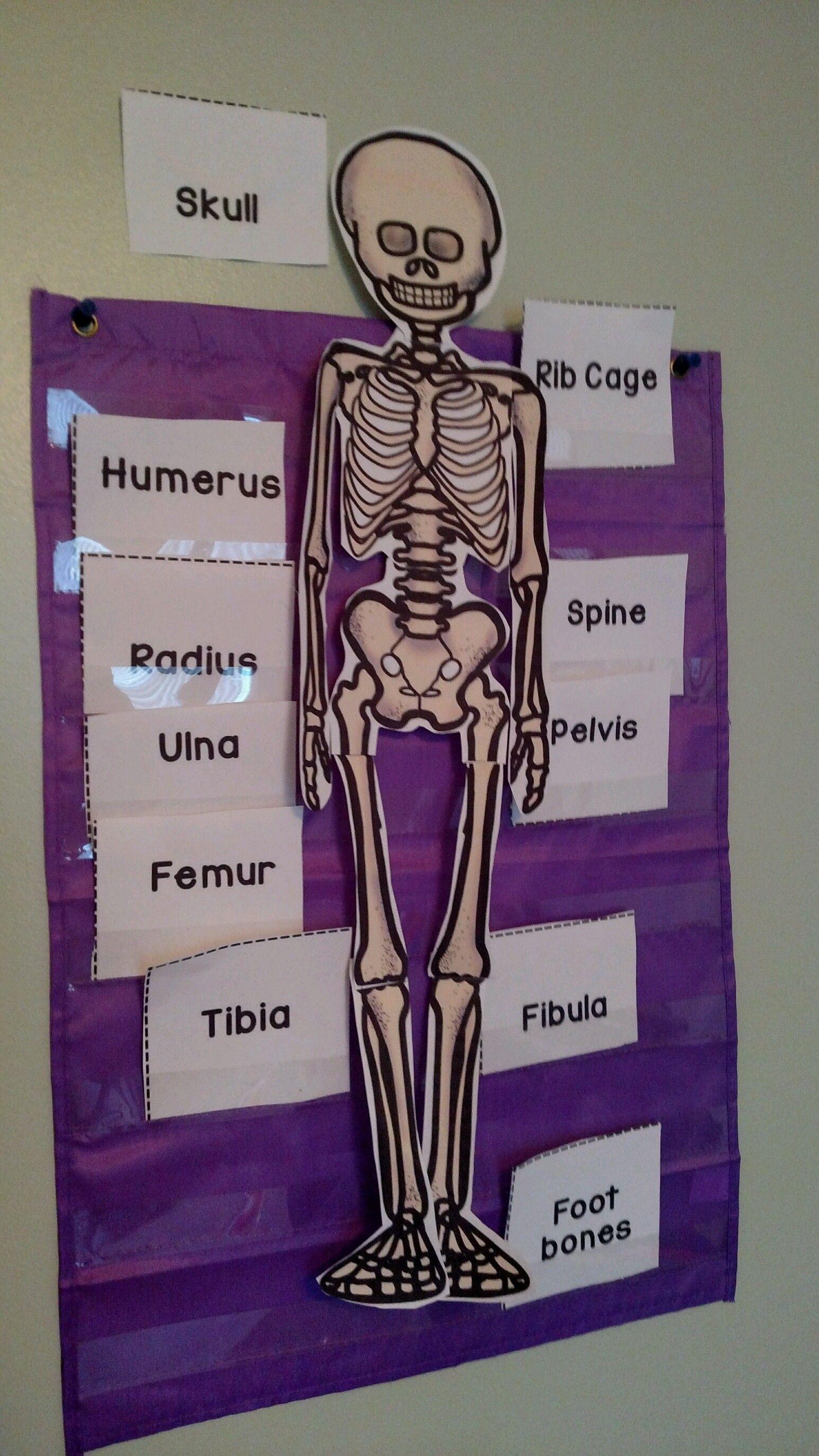 Skeletal System Activities 3rd Grade Pinterest Students