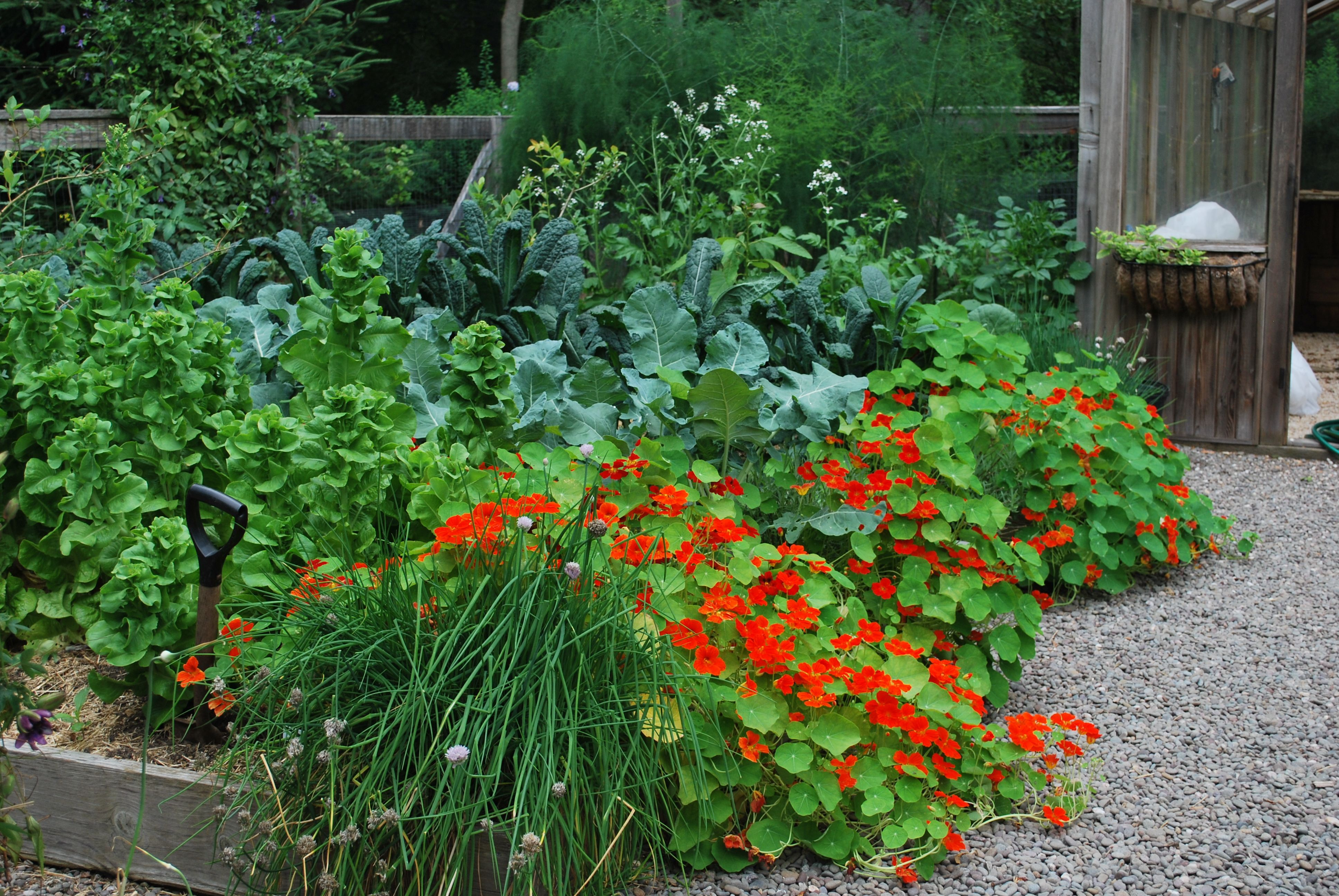 vegetable and flower gardens | Gardening on Anguilla | 27 ...