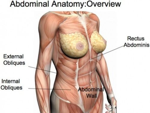 Gallery For Female Abdominal Muscle Anatomy Muscles And Anatomy
