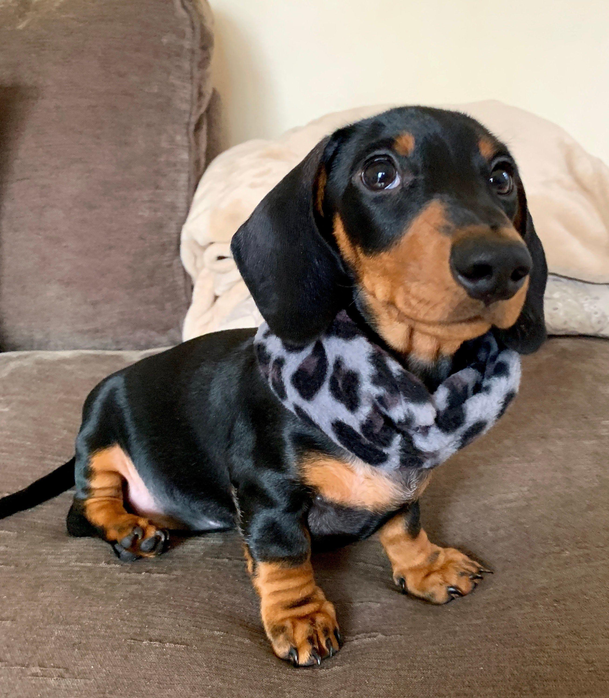Grey Black Animal Print Snood Dog Snood Scarf Dog Neckwear