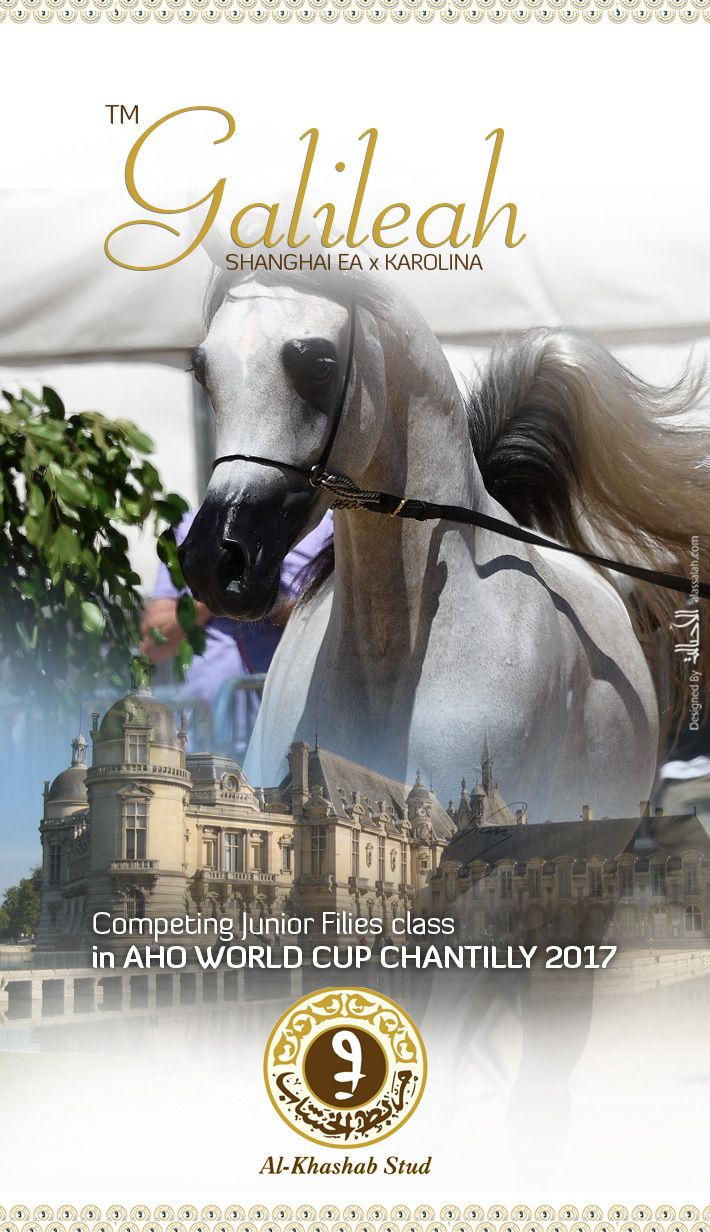 Tm Galileah Competing In Chantilly 2017