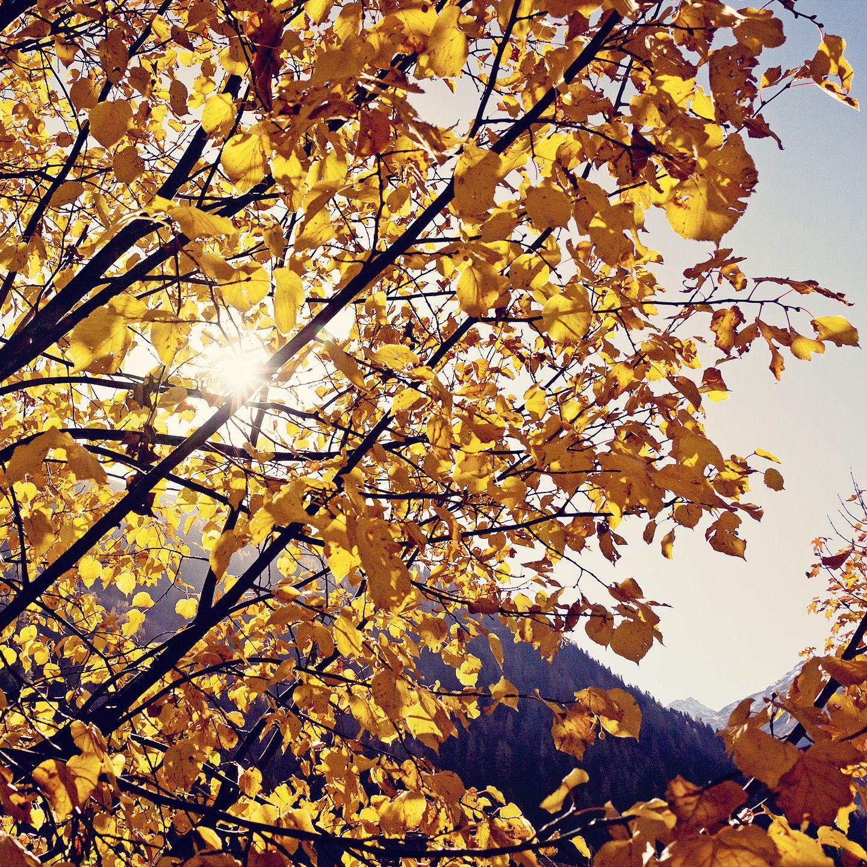 Blätterherbst... / autumn leaves...