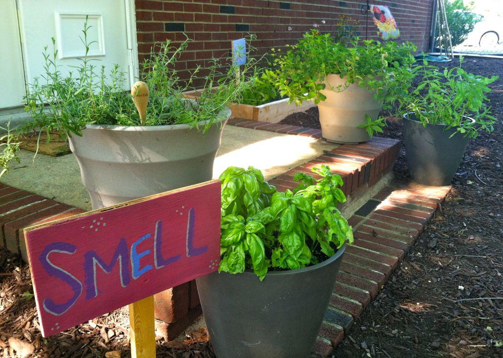Our Sensory Garden in 2020   Sensory garden, Garden tasks ...
