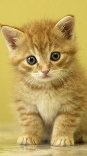 Kitten screenshot #1