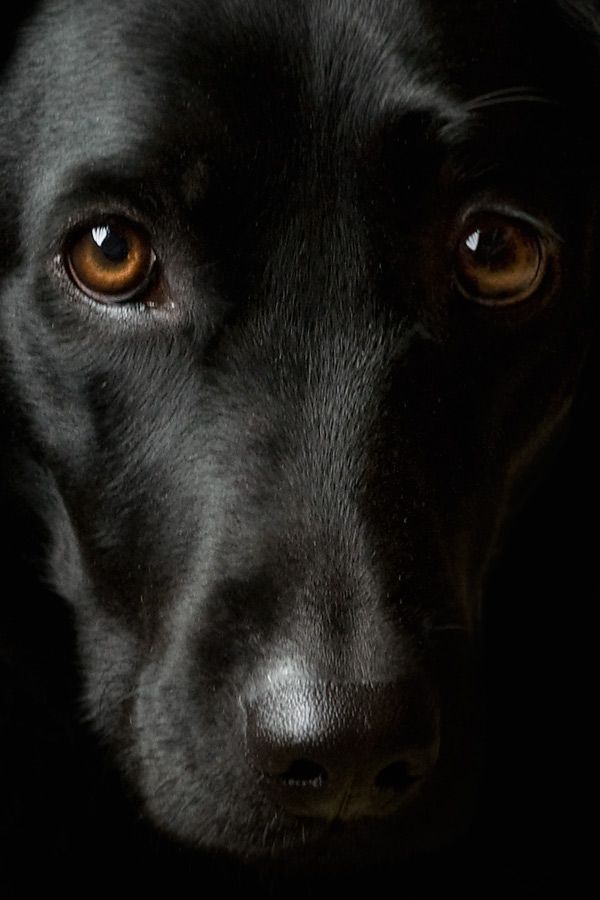 A Glimpse Into The Beautiful Soul Of A Dog Dog Eyes Beautiful Dogs Dogs