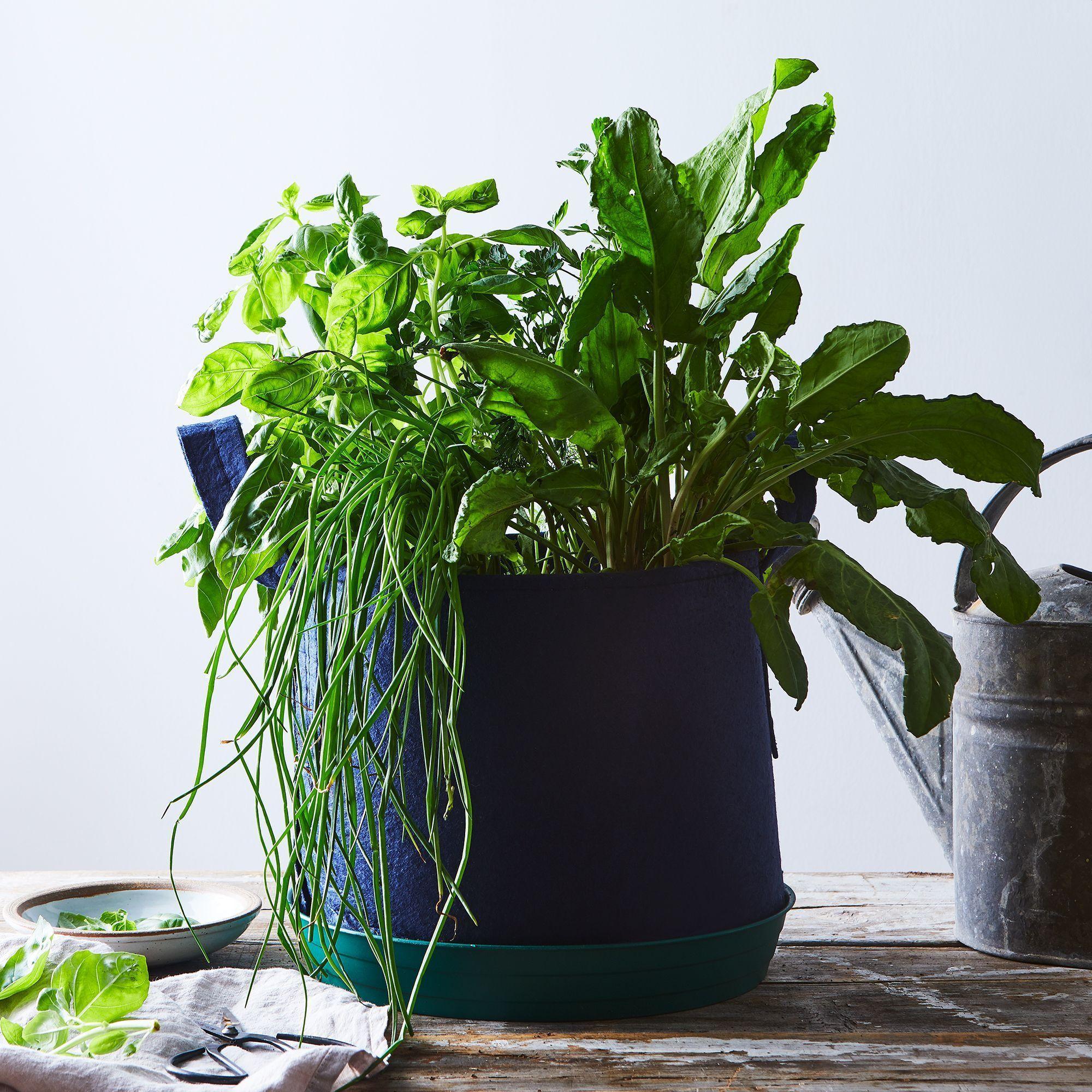 Seedsheet Grow-Your-Own Container Garden #gardeningidea