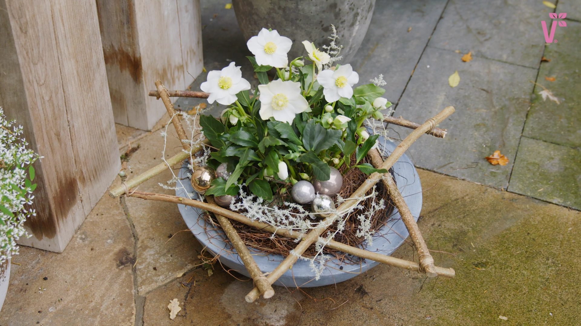Photo of Decoration tip with the Christmas rose WinterSun (Helleborus by Volmary)