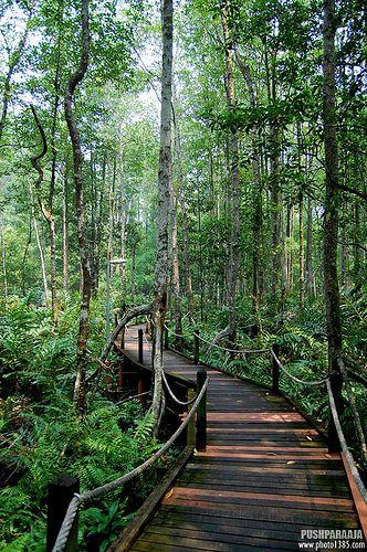 Matang Mangrove Forest