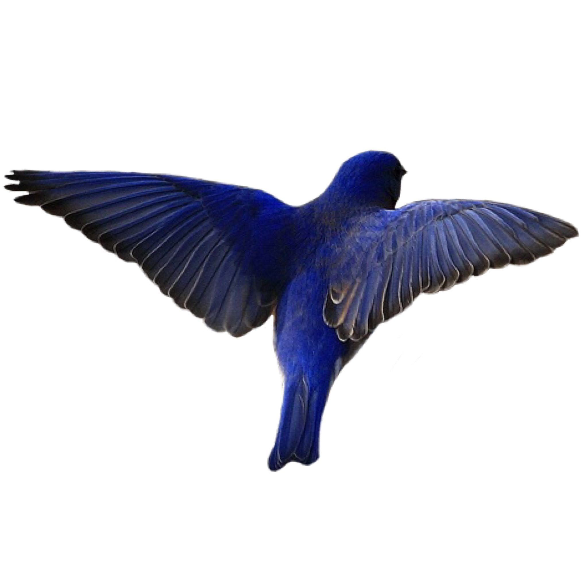 Blue Png Blue Bird Veronica Sawyer Png