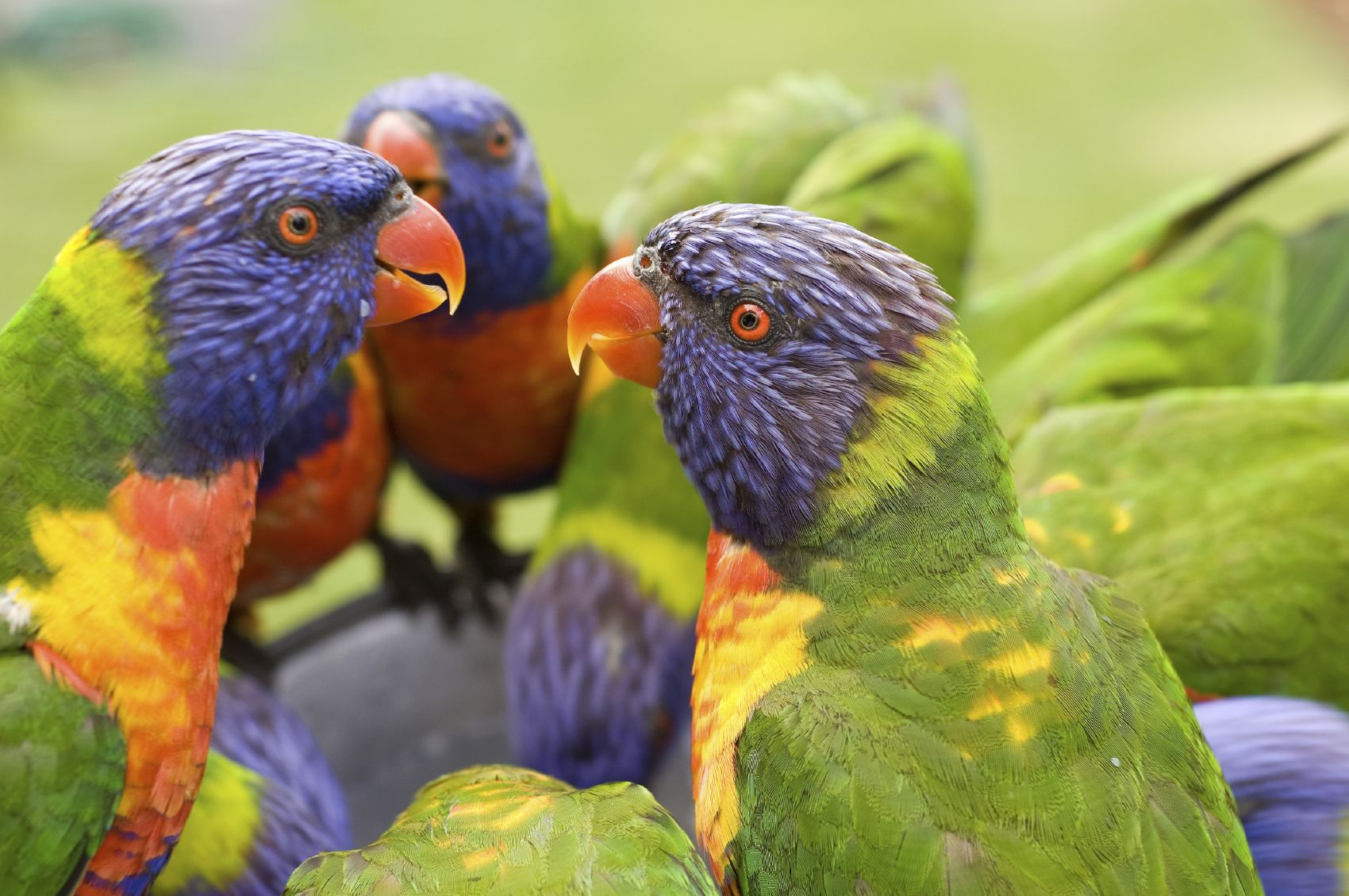Birds of a feather flock together istockphoto