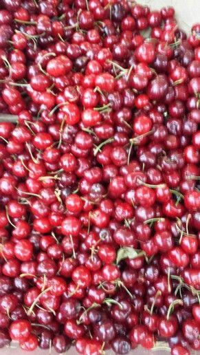 """42. Merge real life and digital can amplify the charism! Look how a pic, out of focus, about cherries obtain more """"likes"""" more than others.  42. Fondere vita reale e digitale può amplificare il carisma! Guarda come una foto, sfocata, di ciliege ottiene più """"mi piace"""" di tante altre. #satira #allafacciadelcarisma #satire #suppostaweb #unasuppostaperte #cherries #italy #sicily"""