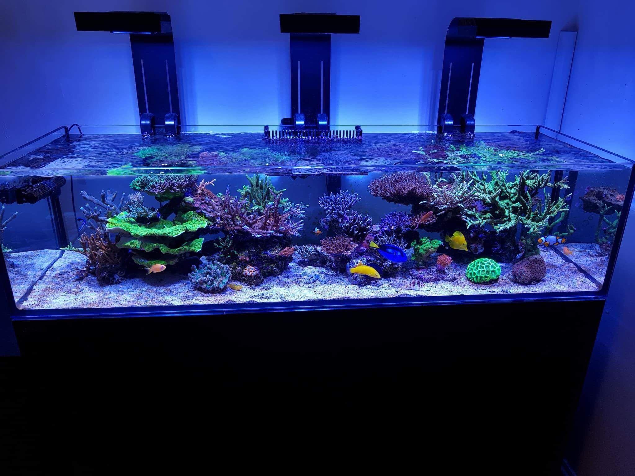 494364142d9a7580c05275f5d8d6556a Frais De Aquarium Recifal Complet Concept