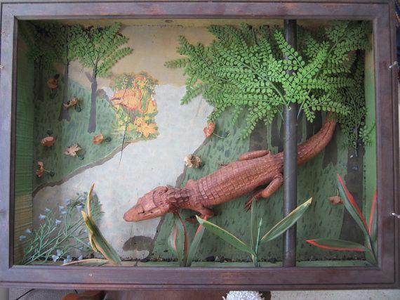 Vintage diorama taxidermy alligator school project  WEIRD!!!!!