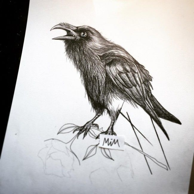 Raven tattoo raven tattoos pinterest raven tattoo for Raven bird tattoo