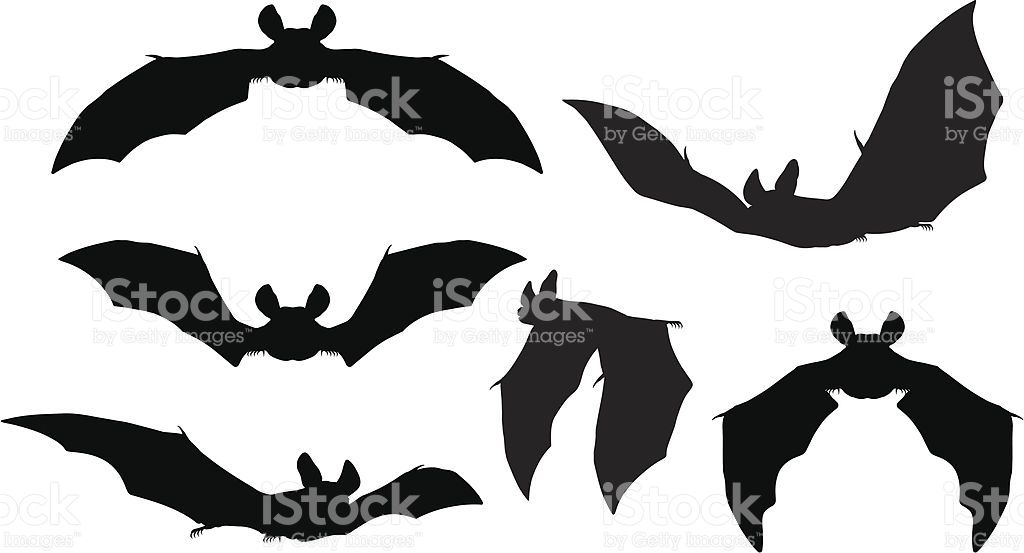 Silhouettes Set Of Bats Flying Bat Silhouette Silhouette Vector Vector Art