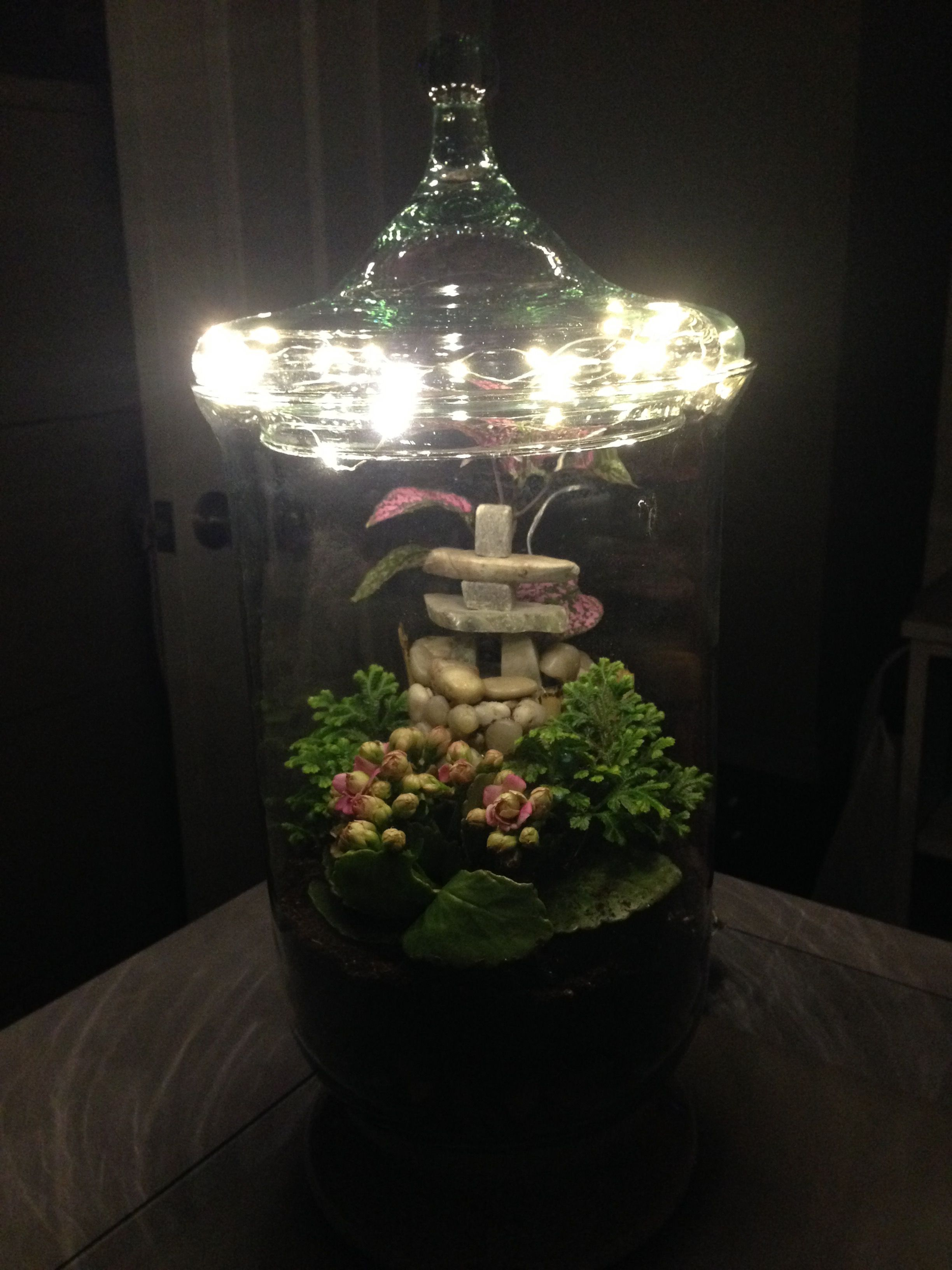Homemade lighted terrarium and this is todayus terrarium lit up the