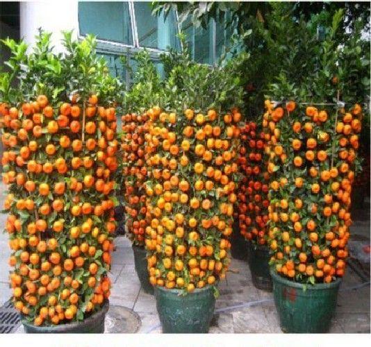 Design Ideas For Vegetable Gardens: Genius Small Garden Design Ideas For Better Homes And