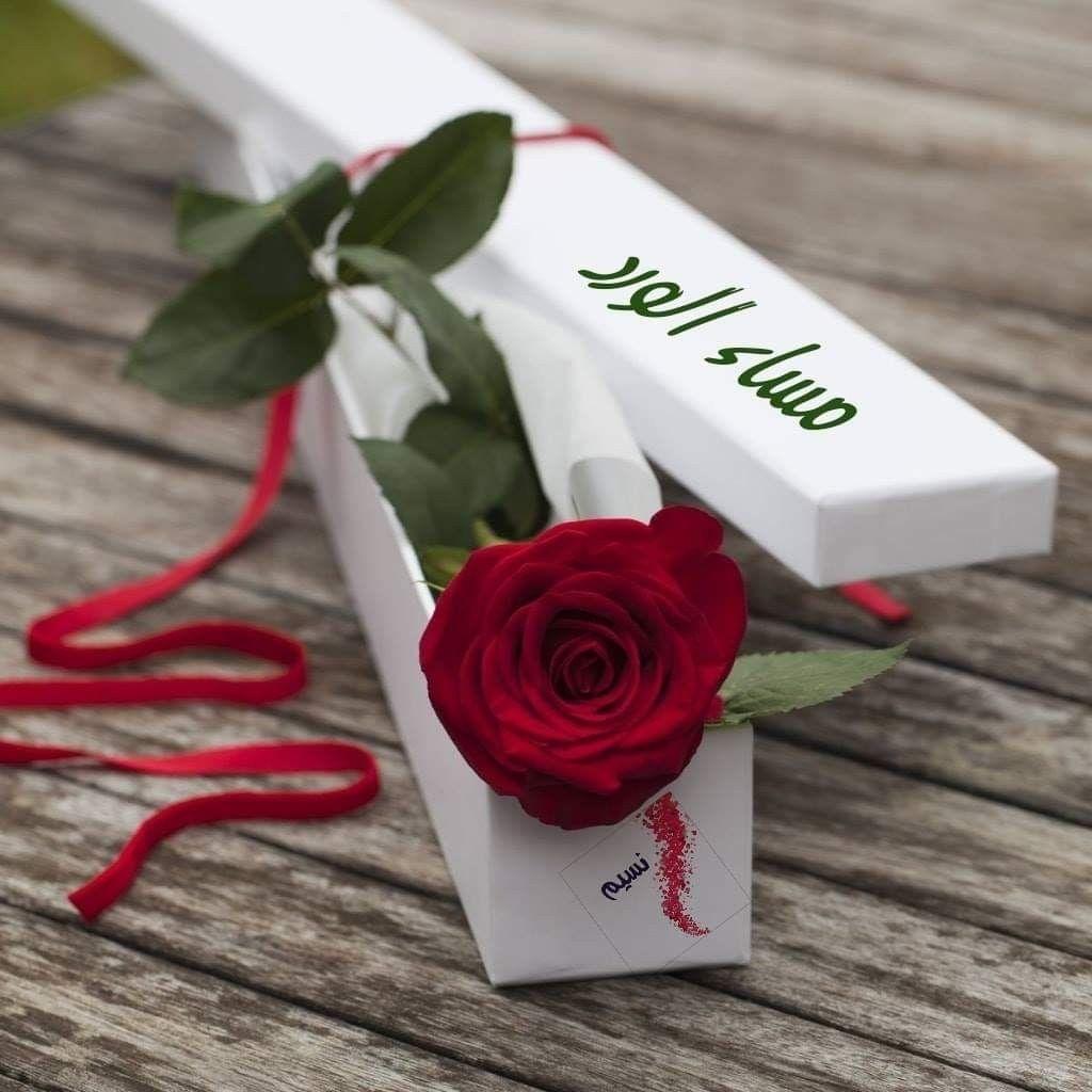 وفي زحام الحي اة نحتاج لعناق ب لا س بب وردة بلا مناسبه ورسالة لط يفہ تجعلنا نبتسم مس Valentines Flowers Beautiful Red Roses Red Roses