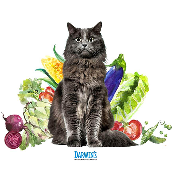 Does My Cat Need Vegetables? Cats, Cat food, Cat health