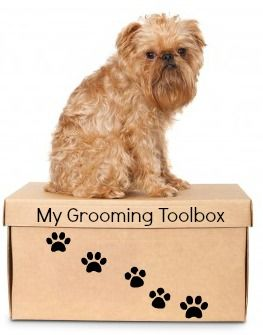 Do it yourself dog grooming for your small dog brussels dog do it yourself dog grooming for your small dog solutioingenieria Choice Image