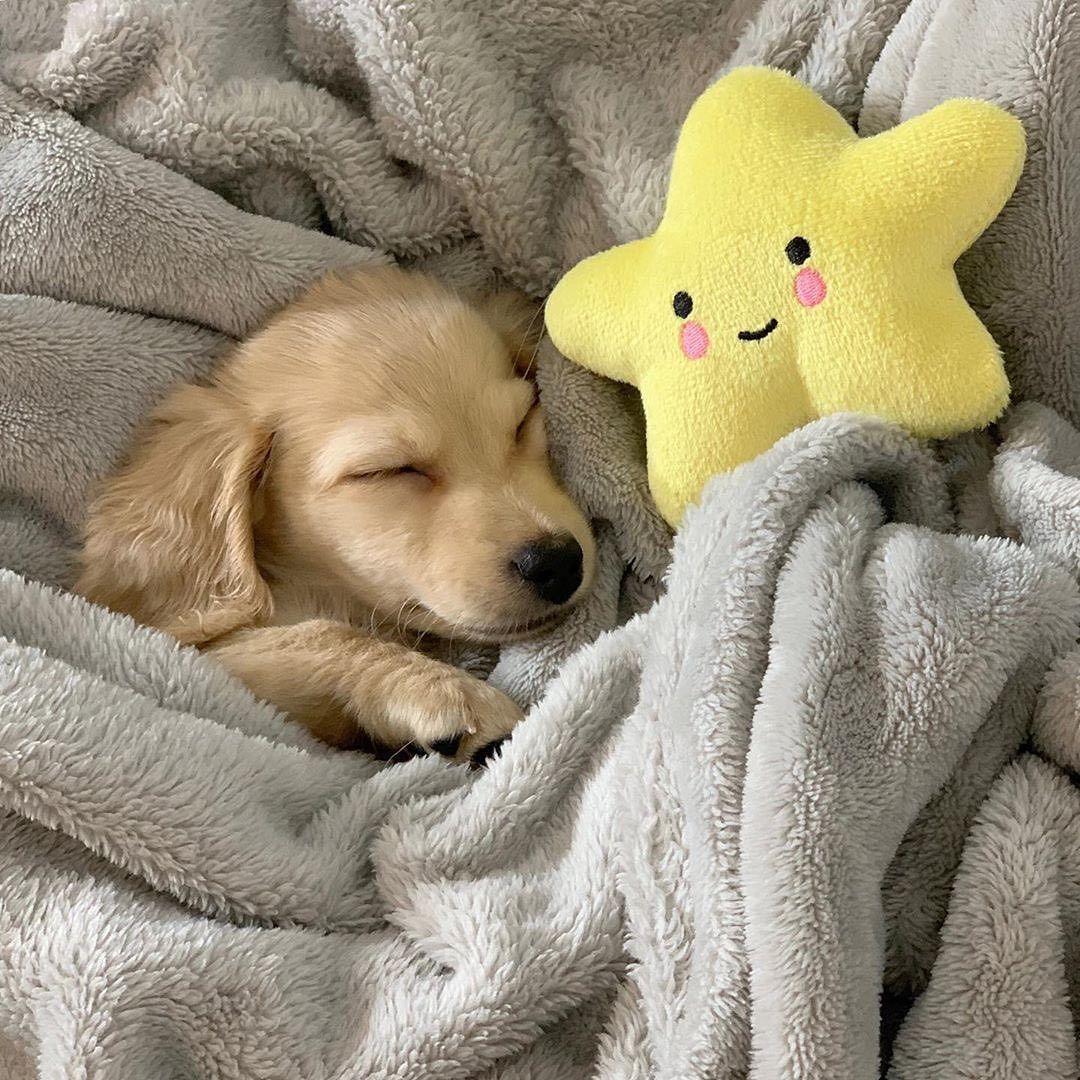 Картинки щенки милые и красивые спящие знак