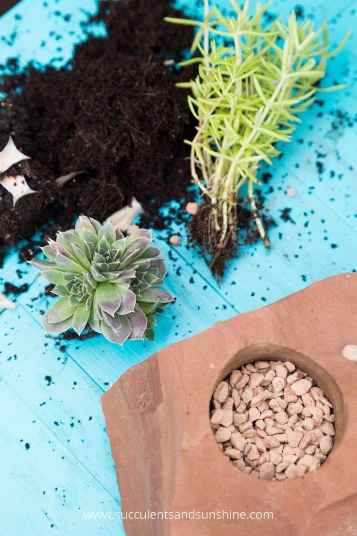 Fun and clever succulent projects succulents and