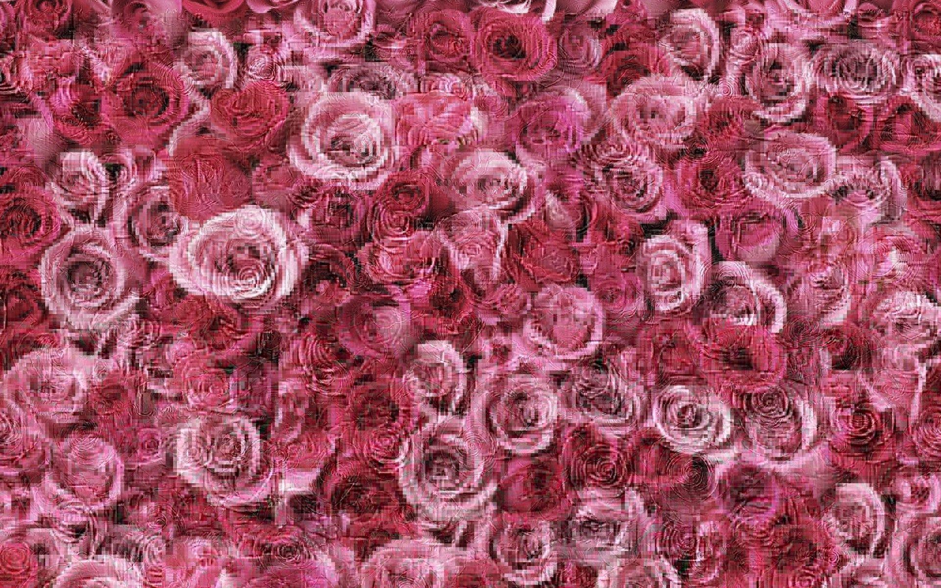 Пин от пользователя Alisa на доске Roses | Розовые цветы ...