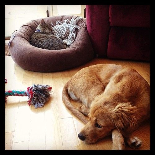 hrhchriscolfer: Family nap time. May 10th, 2014
