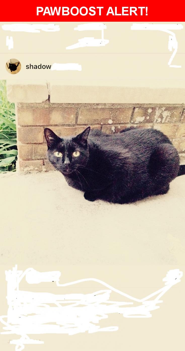 Please spread the word! Shadow-21lbs was last seen in Columbus, OH 43085.    Nearest Address: Worthington, ohio