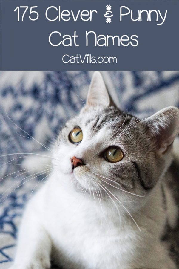 175 Clever and Punny Cat Names Cat names, Funny cat