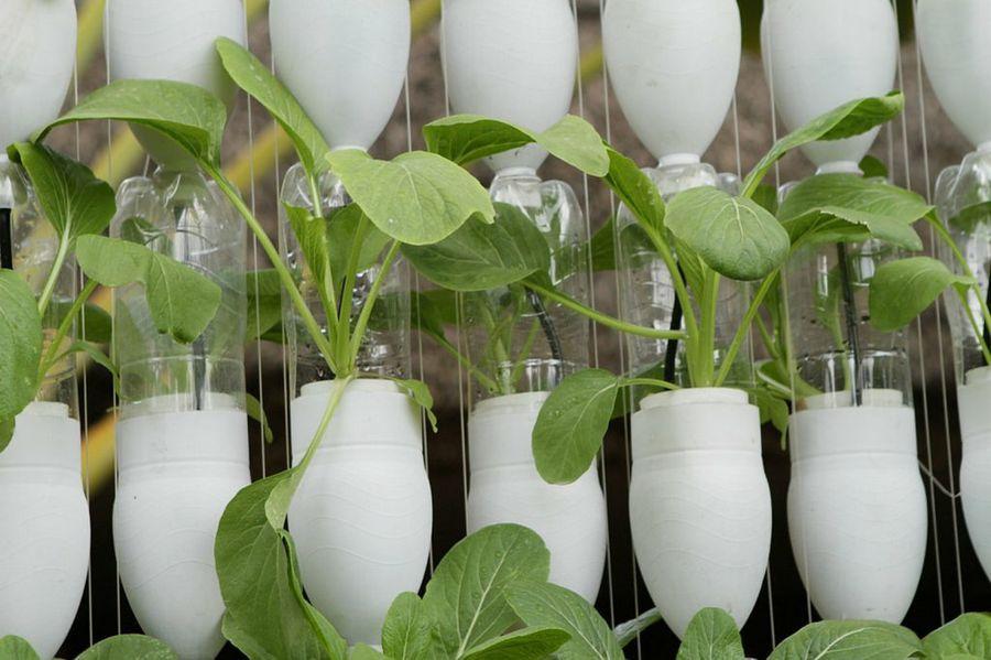 3 Mã Todos Para Plantar Esquejes De Rosa Incluye La Polã Mica Tã Cnica Sobre El Cultivo En Patatas Hydroponics Diy Hydroponic Gardening Hydroponics System