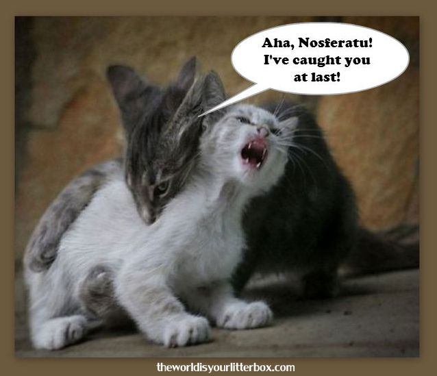 The Kitty Version Of Nosferatu Cute Cats And Kittens Cute