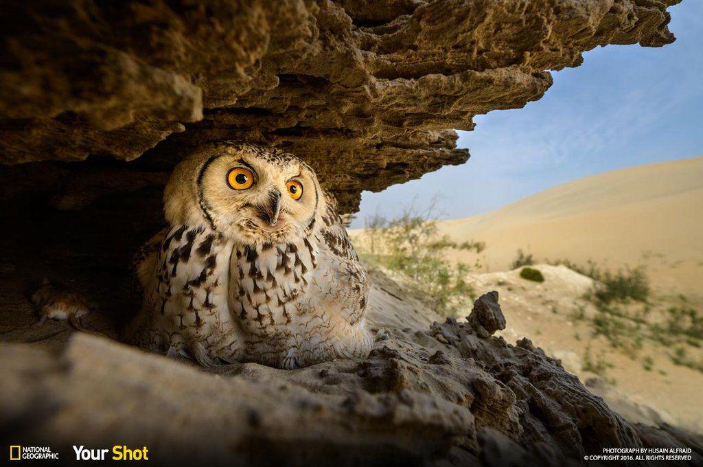 [ARTICLE] @NatGeoPhotos : Top Shot: Watchful Owl https://t.co/2YSrRcW2Kc #YourShot https://t.co/Pg5iFQrNDH