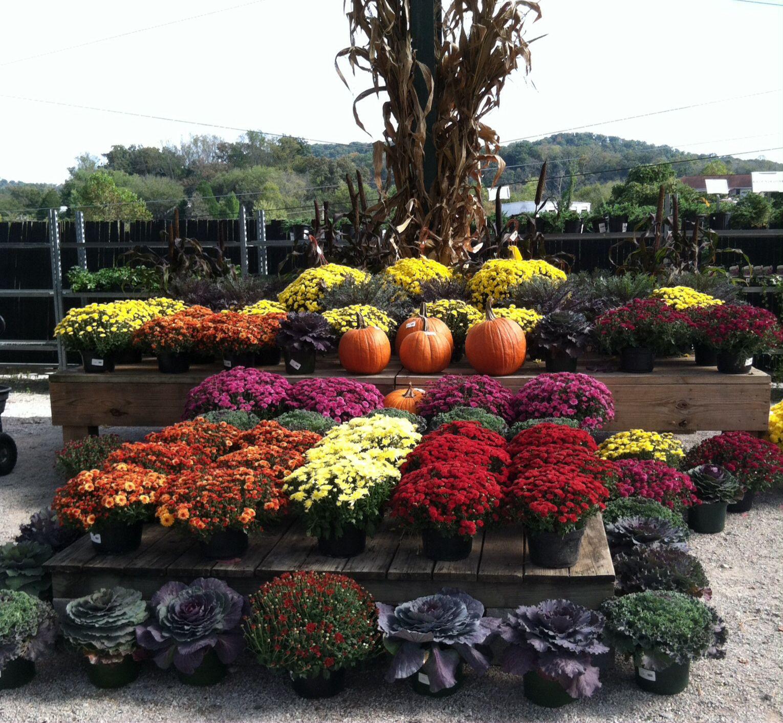 Fall display Garden center displays, Garden center