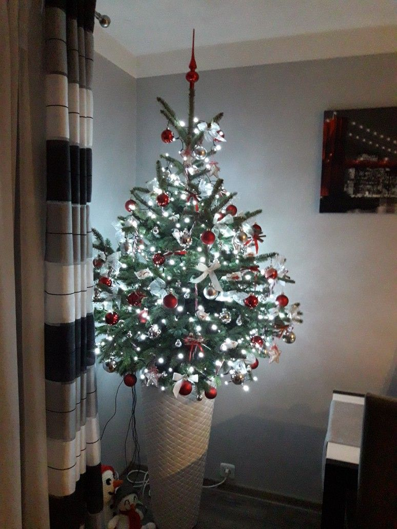 Choinka Swieta Bozego Narodzenia Zywa Choinka Holiday Decor Christmas Tree Decor