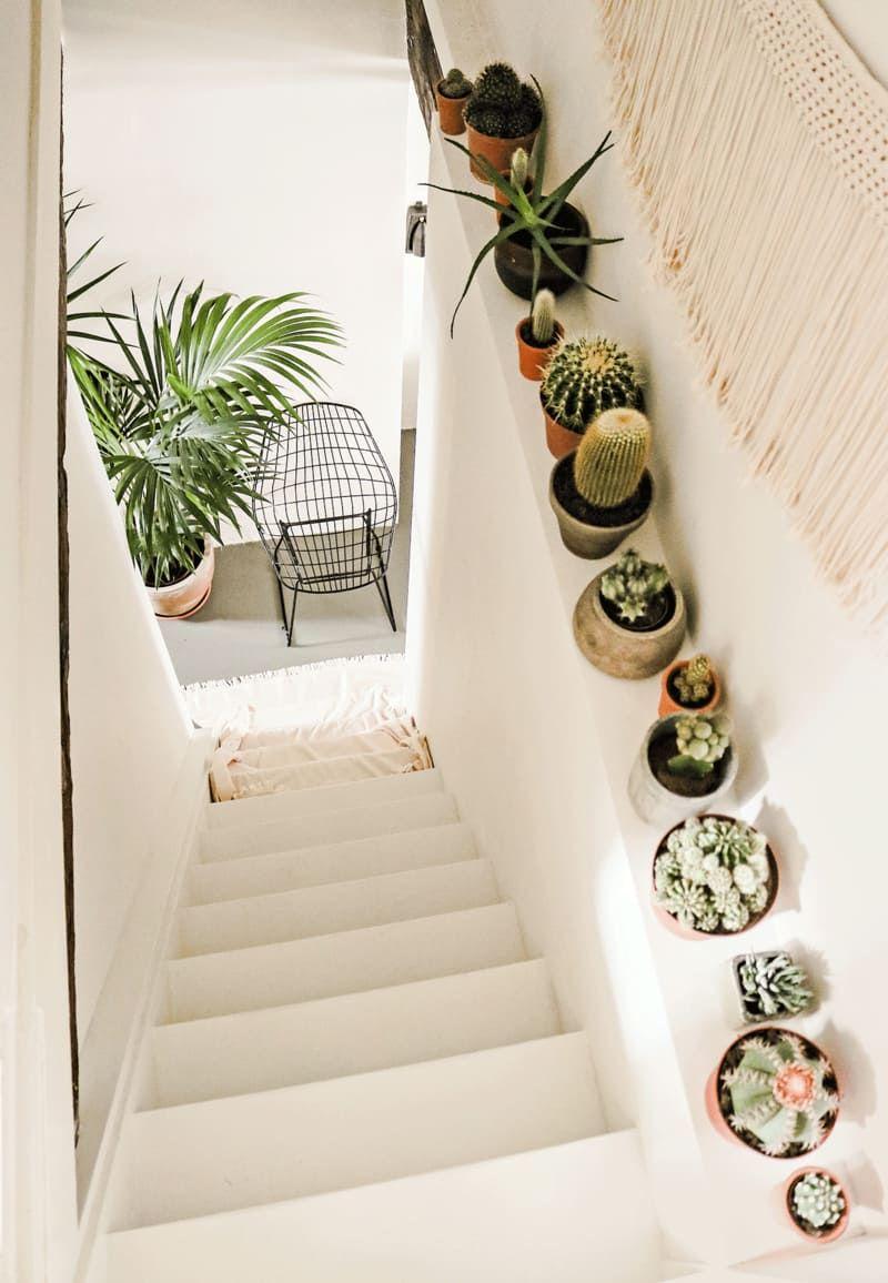 Photo of Kakteen in Haus und Garten
