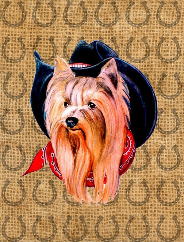 Find This Pin And More On Cool Yorkies.