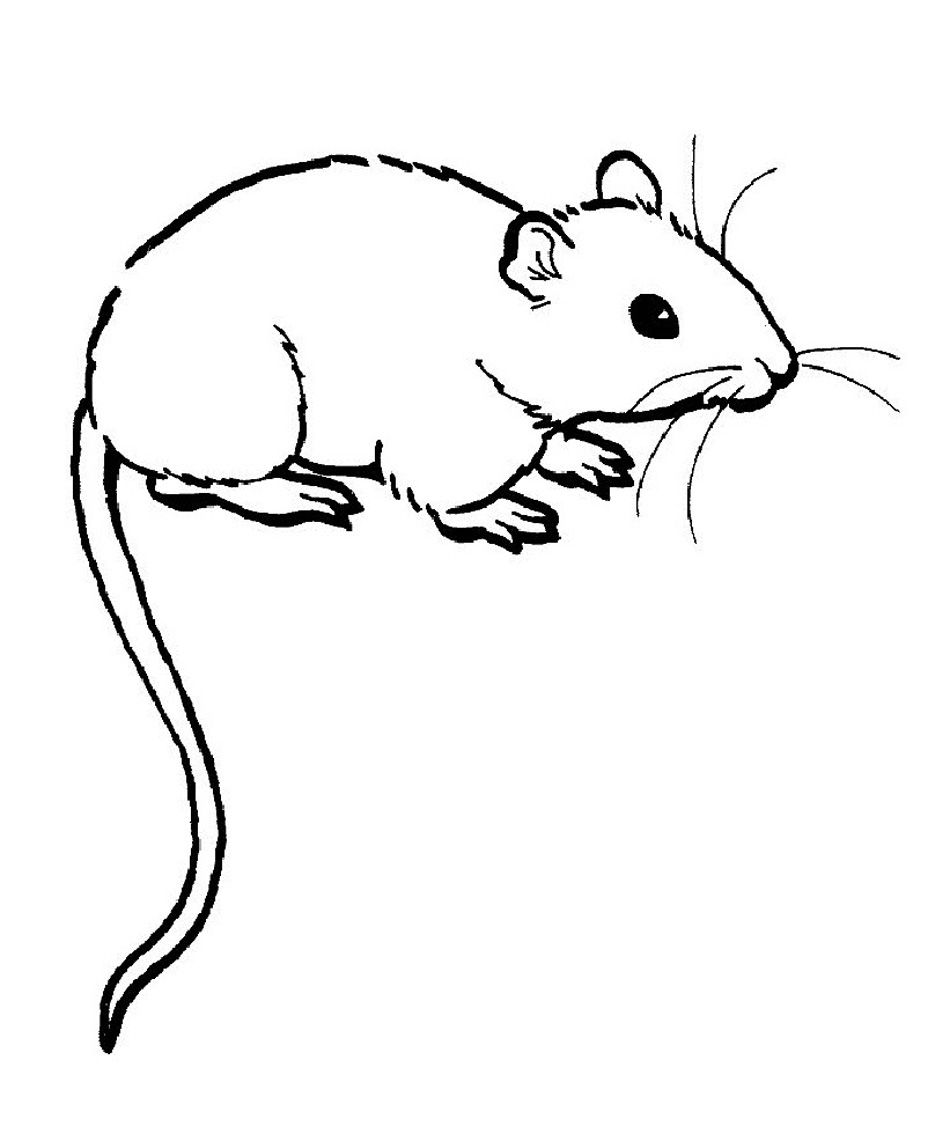Rat Clipart Colouring Page 5 Animal Coloring Pages Coloring