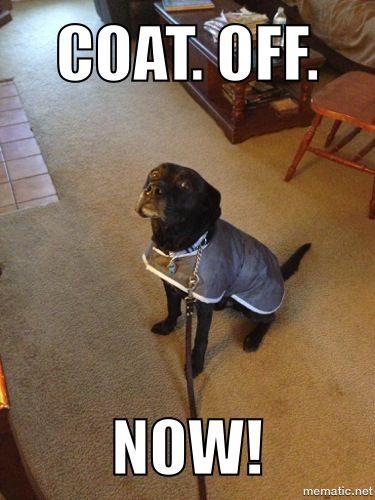 Sampson: I DON'T like this coat , Human!