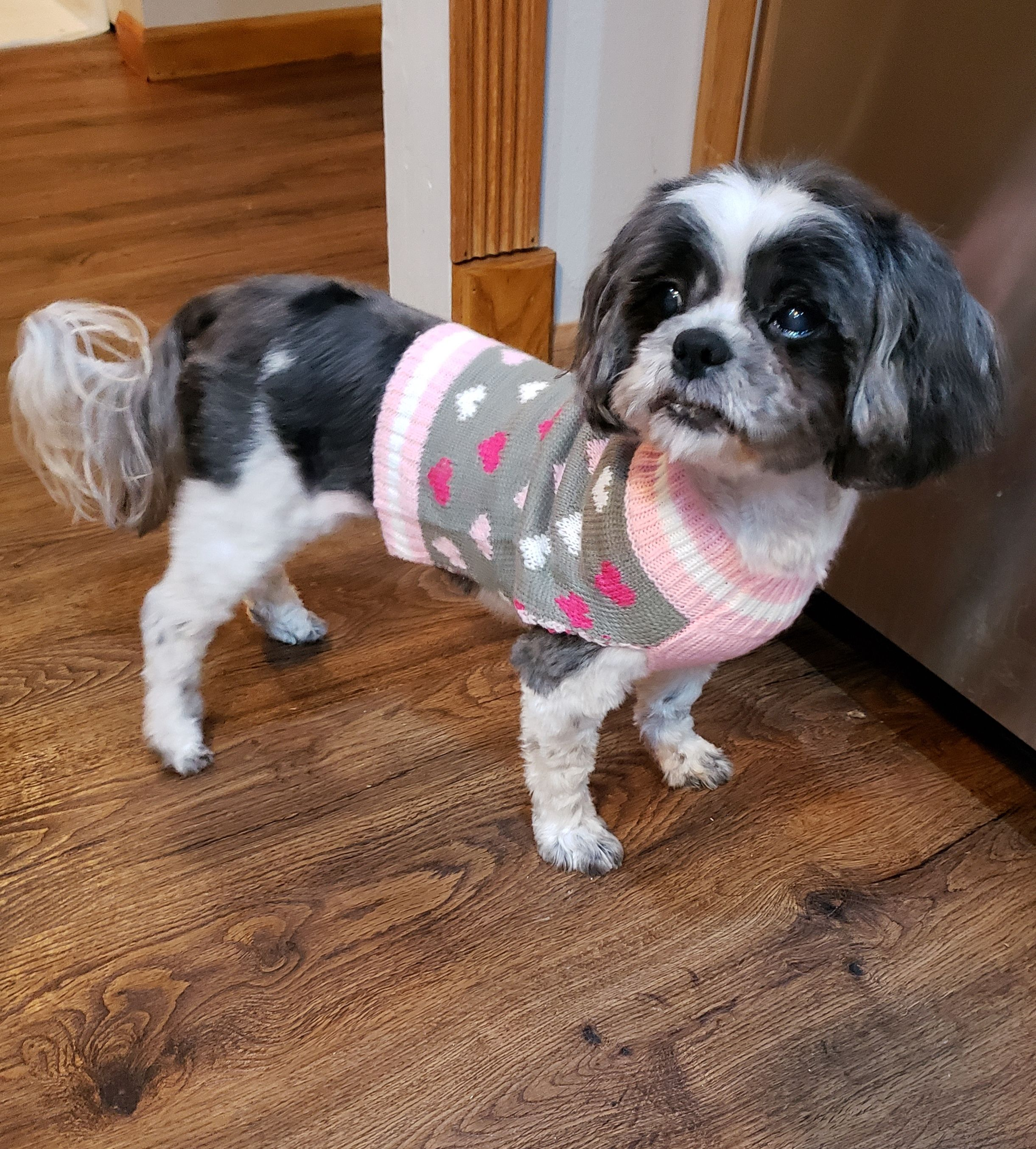 Adopt Rosie Adopted On Small Dog Rescue Shih Tzu Dog Rescue Dogs