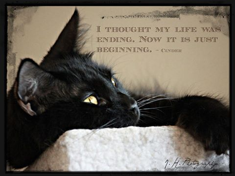 "So many black cats have lives that end unmercifully...just because they were born...""black."" We need to heighten awareness and fight the superstitious, ignorant association and outmoded belief that they are ""evil."" Wake up world we are living in a different world now where people are informed and think critically...oh yeah...that is all in my wishful thinking deluded department. Not yet!"