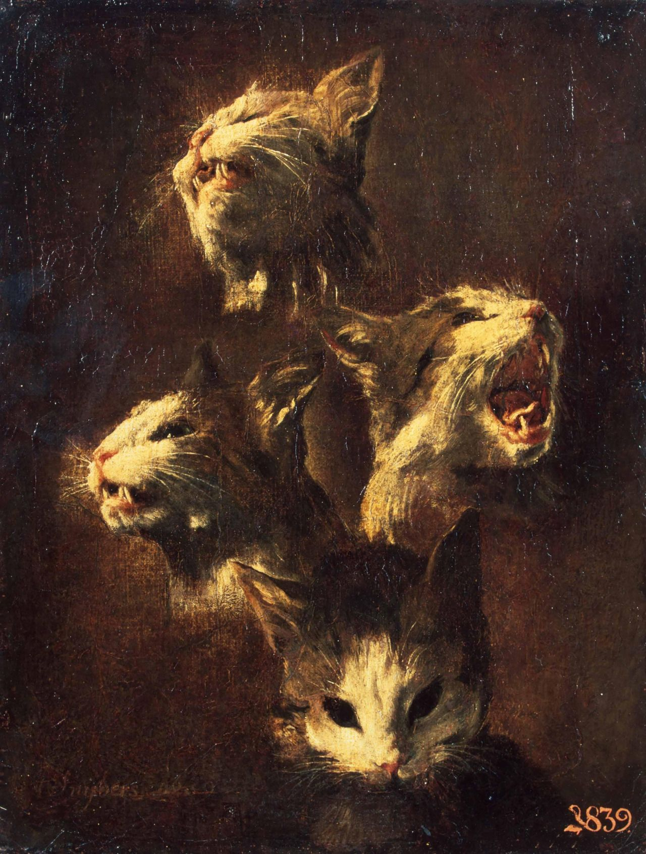 Study of a Cat's Head |1609 ~ by Frans Snyders