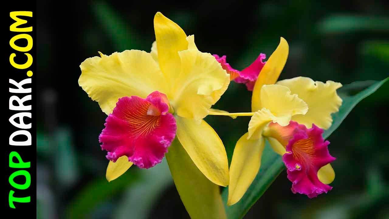 20 Flores De Orquideas Mas Hermosas Del Mundo Banderas Escudos
