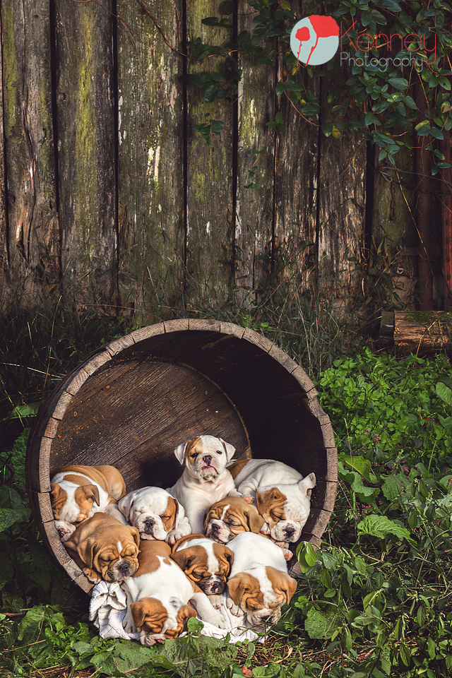 Just Looking The Picture Makes You Want To Pick Them All Up Carry Them Home Great Photo Professional Photo By Ke Hundebabys Bulldogge Susse Tiere