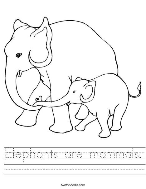 Elephants Are Mammals Worksheet Mammals Elephant Coloring Page