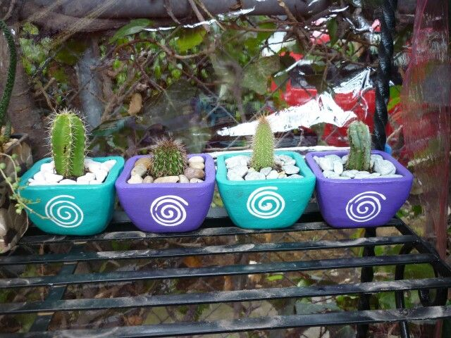 colección de cactus en macetas de colores.   succulents & cactus