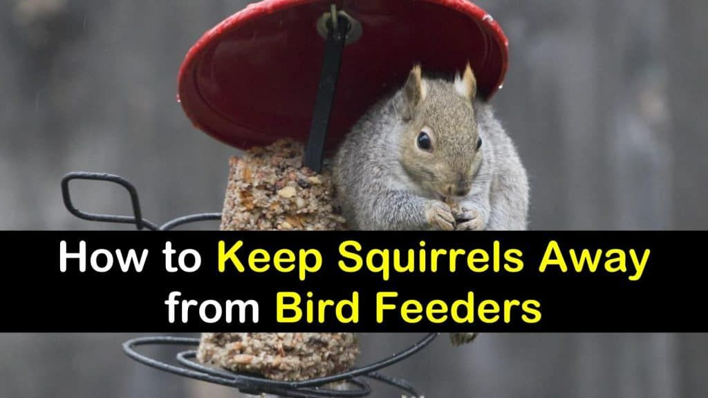 How to keep squirrels away from bird feeders garden - How to keep squirrels away from garden ...