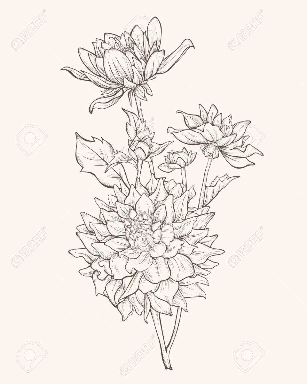 Dahlia Flower Isolated On White Background In 2020 Dahlia Flower Tattoos Flower Line Drawings Flower Tattoo Drawings